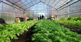 تاثیر گرمایش تابشی بر گیاهان